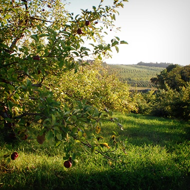 Hollis Orchards