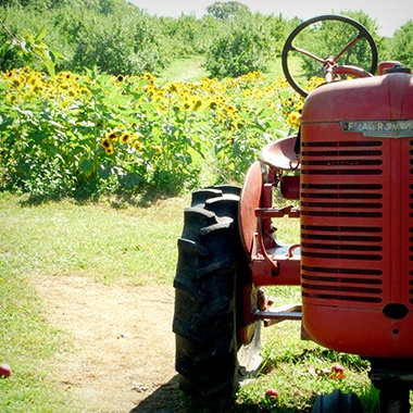 Tractor at Lull Farm